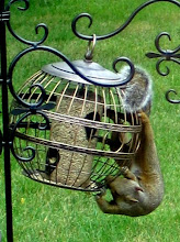 Photo: My pesky squirrel