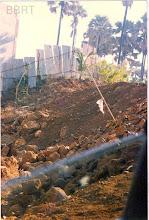 Photo: 1998 - Hillock ravaged