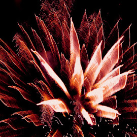 AND THE ROCKETS RED GLARE by Jennifer  Loper  - Public Holidays July 4th ( red, fireworks, july 4th, flower-like, independence day celebration,  )