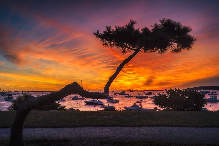 Crooked Tree by Matt Reynolds - Landscapes Sunsets & Sunrises