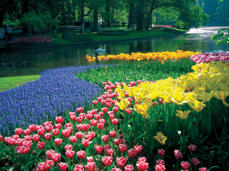 Keukenhof Lake and Gardens in Lisse, the Netherlands.