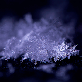 fresh snowflakes by Kevin Adams - Nature Up Close Water