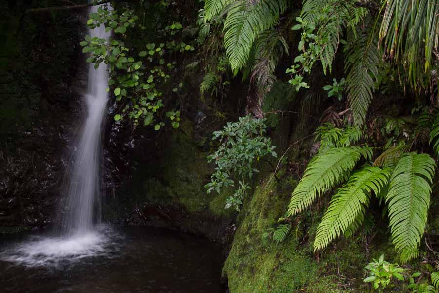 Photo: A small creek along the side of Waioeka Gorge road.