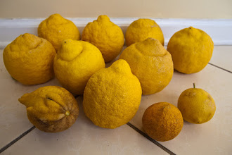 Photo: some of the bigger and smaller lemons