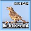 Horsfield Bushlark Sounds APK