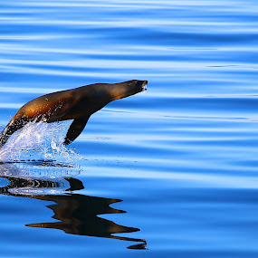 Exuberance by Capt Jack - Animals Sea Creatures ( water, marine, seal, sea creature, sea lion, sea, ocean,  )