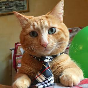 henry cu cravata.JPG