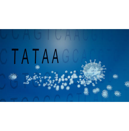 TATAA GrandPerformance SARS-CoV-2 Detection Kit (CE-IVD)