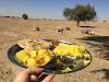 India. Rajasthan Thar Desert Camel Trek. Rajasthani Lunch in the Thar Desert