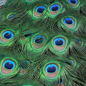 simple beauty by Monika Wierzbicka - Animals Birds