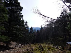 鞍部から小河内岳