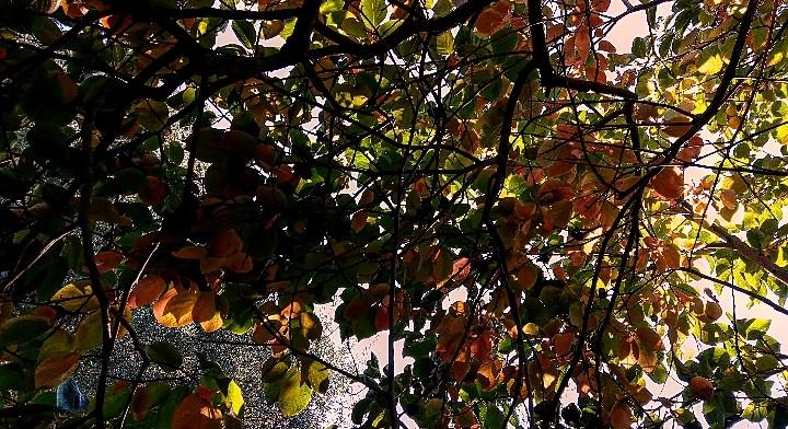 Albero nelle luci di lisa_1036