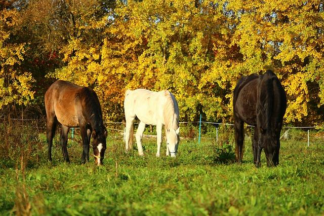autumn horse horses fall pasture grass - NW Horse Source