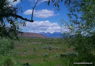 Photo: South Steens from inside the Fields Oasis