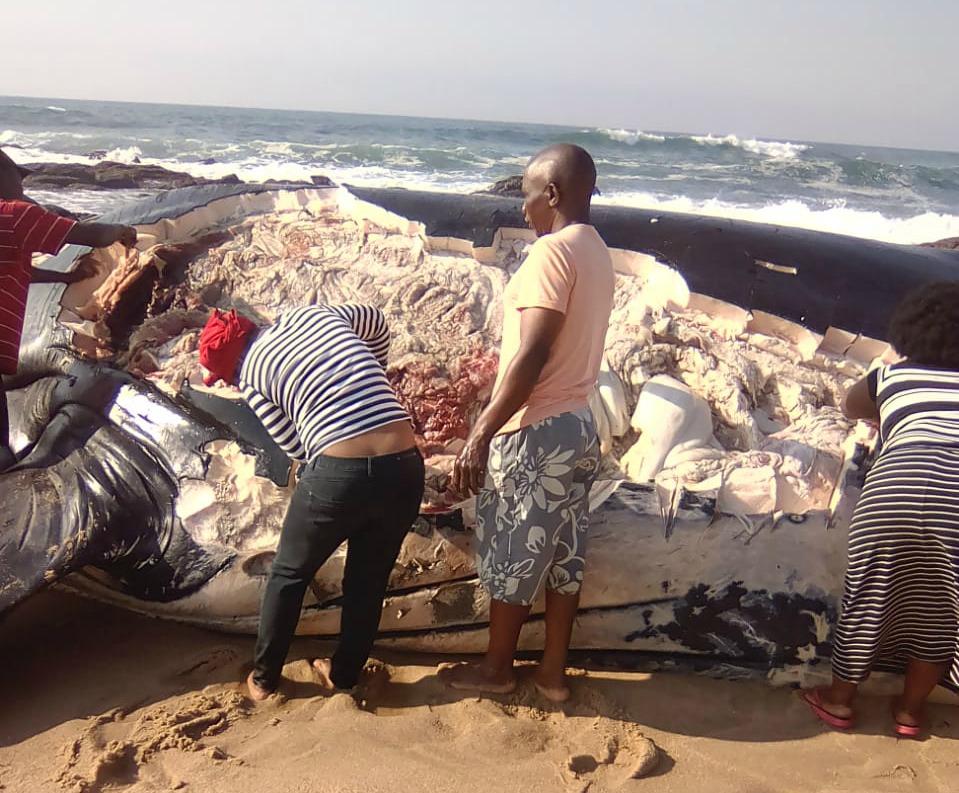 Dooie walvis wat deur inwoners op KwaZulu-Natalse strand gekap is - SowetanLIVE