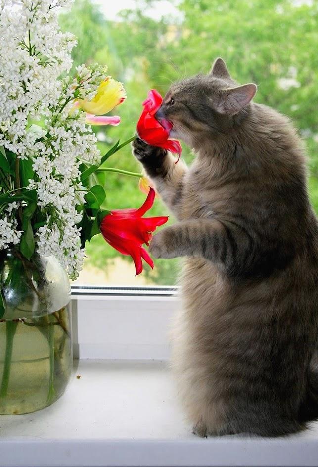 "gZm4602BhGMfjvcI3r079I6sd1MkayFSxTHG 3uVhrI=w644 h943 no - 18 ""видов"" кошек"