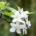 Springtime Live Wallpaper icon