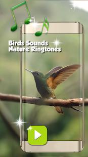 bird sound sms ringtone mp3
