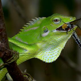 by Yulianto Efendy - Animals Reptiles