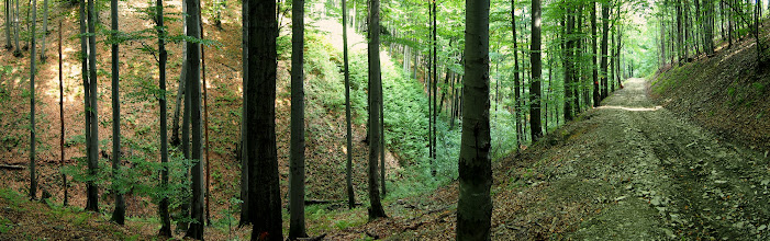 Photo: Z Polany jadę na Poniwiec i Rycerską ścieżką kieruję się na szczyt. W planach mam dzisiaj znane mi już bardzo dobrze Pasmo Czantorii. Niestety Ścieżka Rycerska została zepsuta, wysypano dużo luźnego kamienia, co przy tym nachyleniu powoduje, że trudno się podjeżdża :(