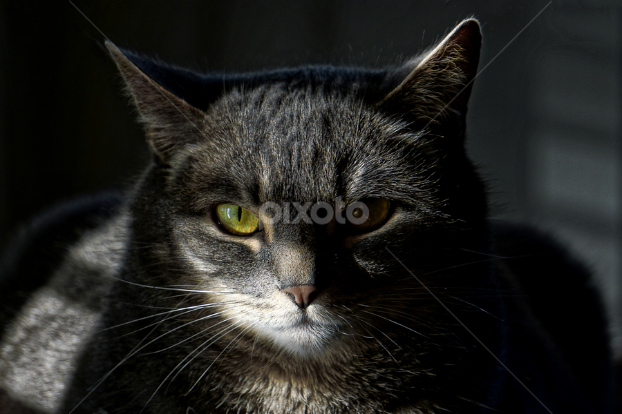 Fred  by Todd Reynolds - Animals - Cats Portraits