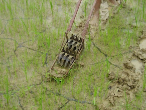 Photo: Rotary weeder in Nepal. [Photo courtesy of Andreas Jenny]