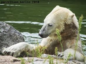 Photo: Den Fisch auf der Insel will Knut aber auch ;-)