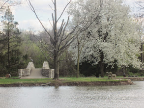 Photo: Crane sitting on a stone bridge by a blossoming pear tree on a pond at Eastwood Park in Dayton, Ohio.