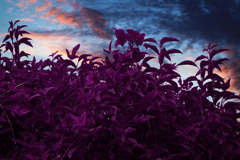 Siepe al tramonto di LB foto