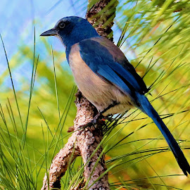 by Augustine Juliano - Animals Birds