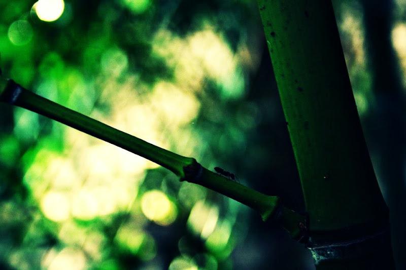 aura verde di purple