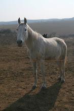 Photo: a ló