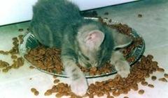 sleeping_kitten-784084[1]