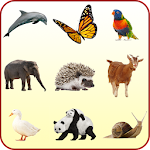 Animals Guide for Kids