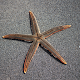 Star Fish HD Mobile Wallpaper Background for PC-Windows 7,8,10 and Mac