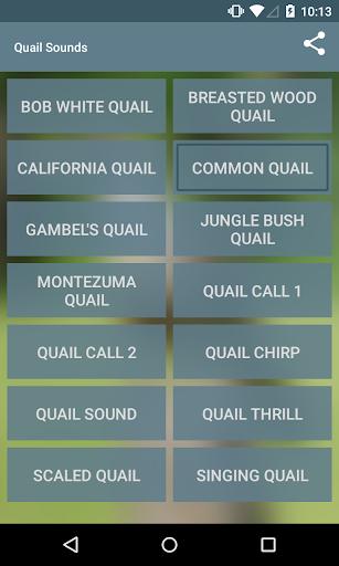 Quail Sounds