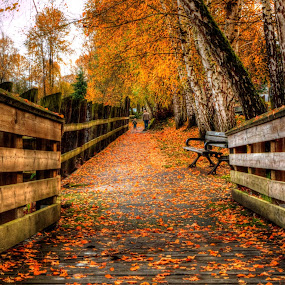 A walk on the trail by P Murphy - City,  Street & Park  City Parks (  )