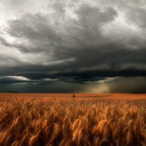 by Hauk Tamas - Uncategorized All Uncategorized ( wheat, clouds, sunset, summer )