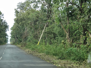 Photo: We were in Orissa state of India directlyon the heels of Cyclone Phailin which went through this region. We seen many trees down as well as power lines down. But the roads had already been cleared. There was very little damage beyond downed treesand power lines.