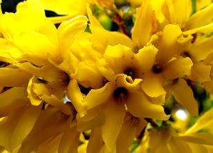 Photo: Still blooming . . .