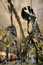 Photo: Vienna - Museum of Natural History