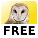 Magic Owl Free icon