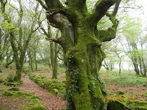 Photo: à travers forêt