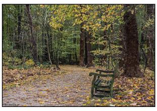 Photo: Natuur Bos in de herfst. Foto: Bert Morsink.