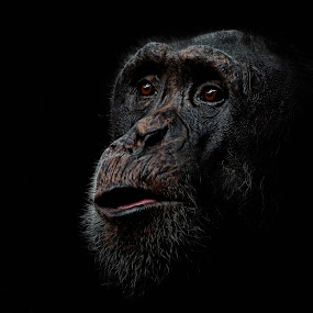Old Timer by Annemarie Rulos  - Animals Other Mammals