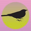 Blackbird Studio icon