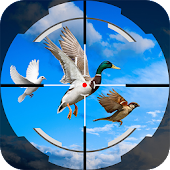 Bird Shooting 3D : Forest Bird Hunting Simulation