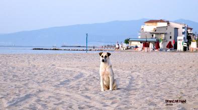 Photo: Strand mit Hund in Paralia, Pieria, Greece