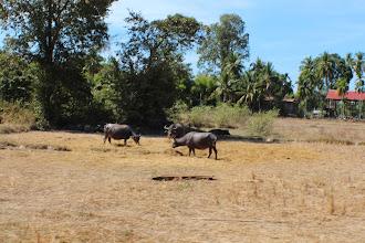Photo: Laos Reisen, Don Det
