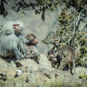 Abha City, Ksa by Roel Gestiada - Animals Other Mammals